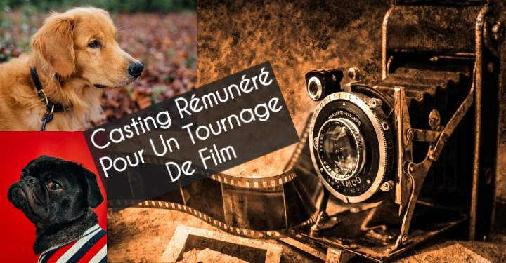 Casting Tournage Film Chien Loup