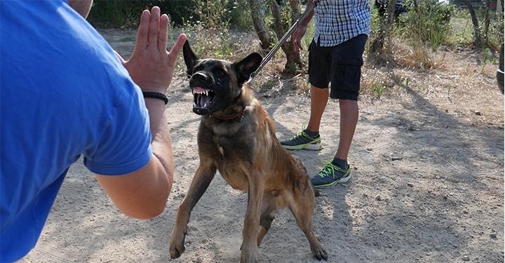 Eric Tramson vous explique comment aborder un chiot ou chien inconnu