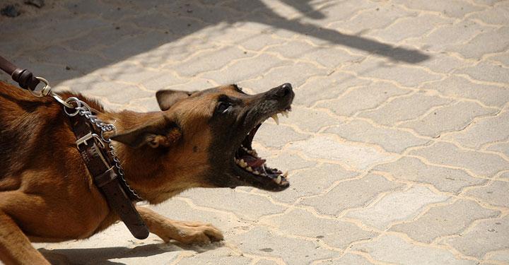 agressivité du chien