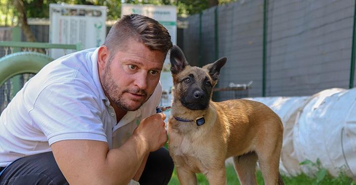 Education D Un Chiot - 10 techniques à savoir - Education canine - Tuto