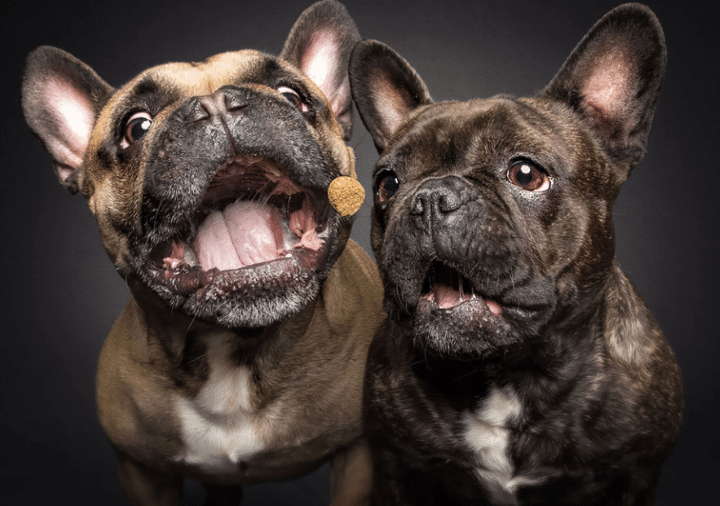 comparateur de croquettes pour chiot et chien