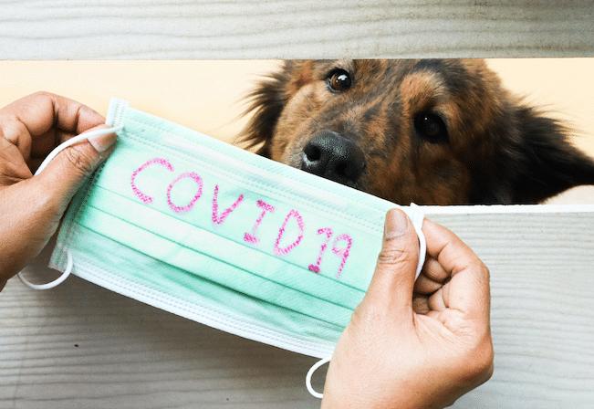 Le coronavirus le covid 19